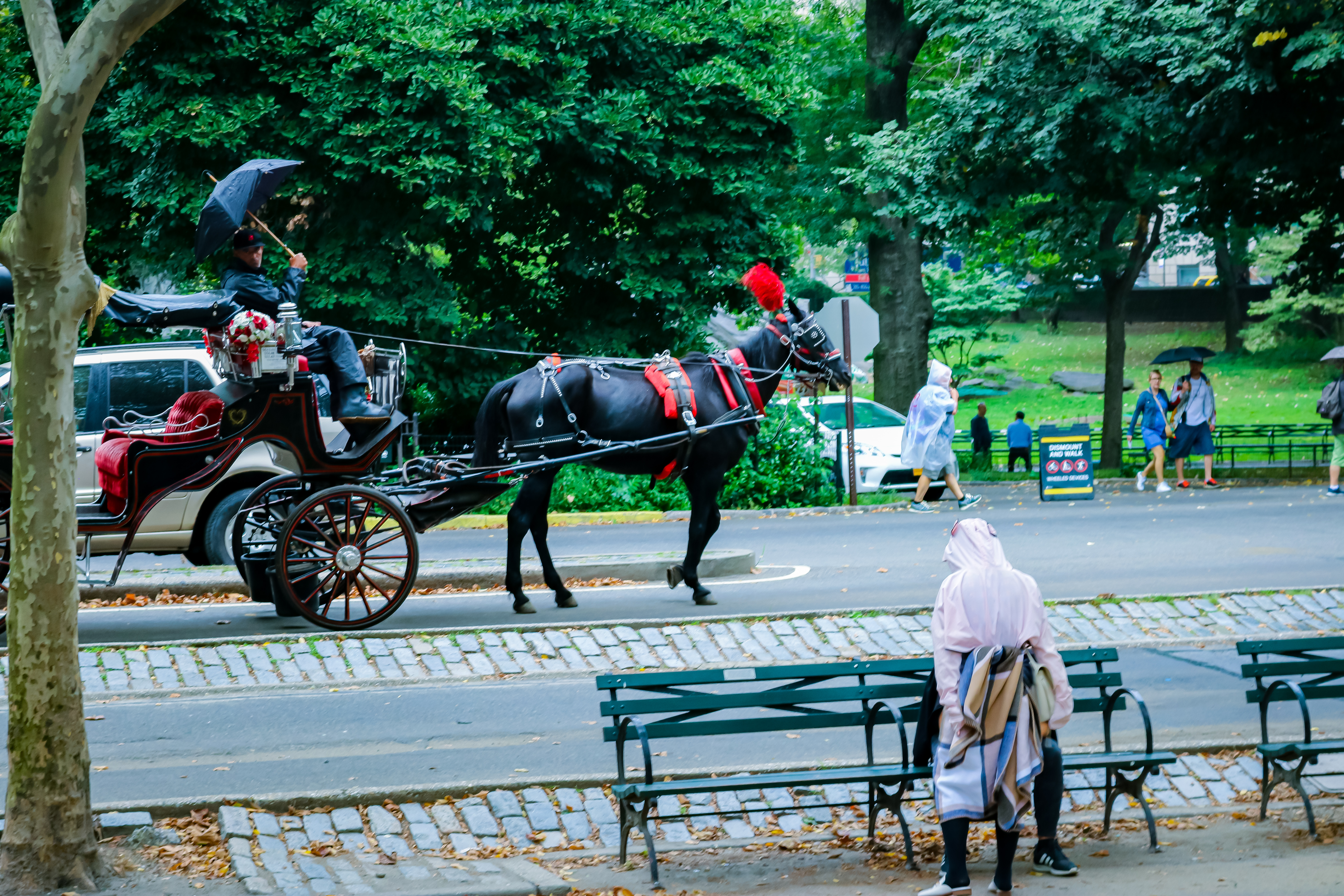 horses with carriages in Central park